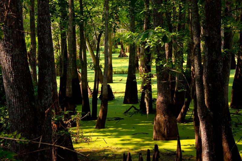 Crossing the Swamp