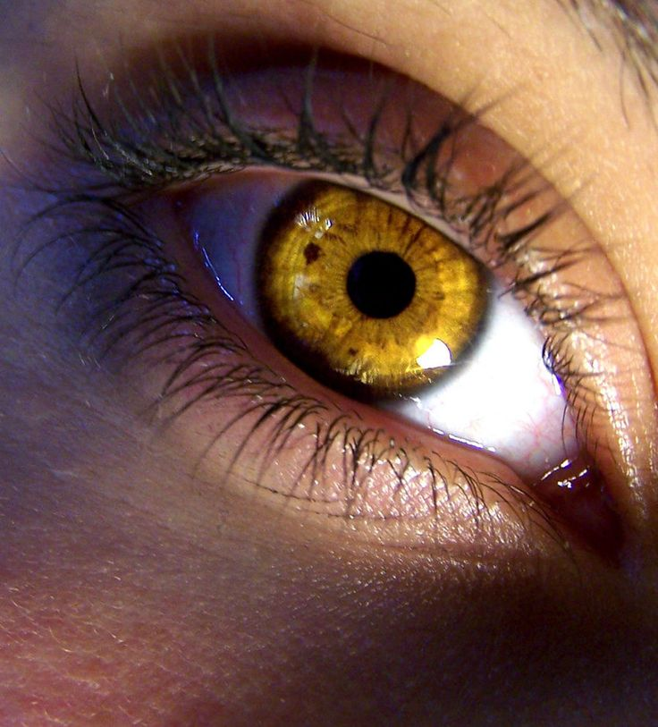 Alma Dayton und die Schattierung ihrer Iris
