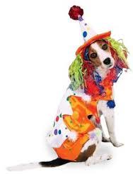 Clown Dogs