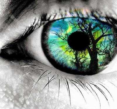 Augen Voller Vertrauen