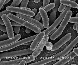 Bacteria Genocide
