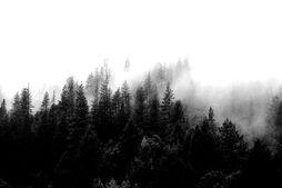 Wald 1.jpeg