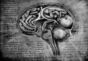 Brain fetus by aruthizar-d47sjys.jpg