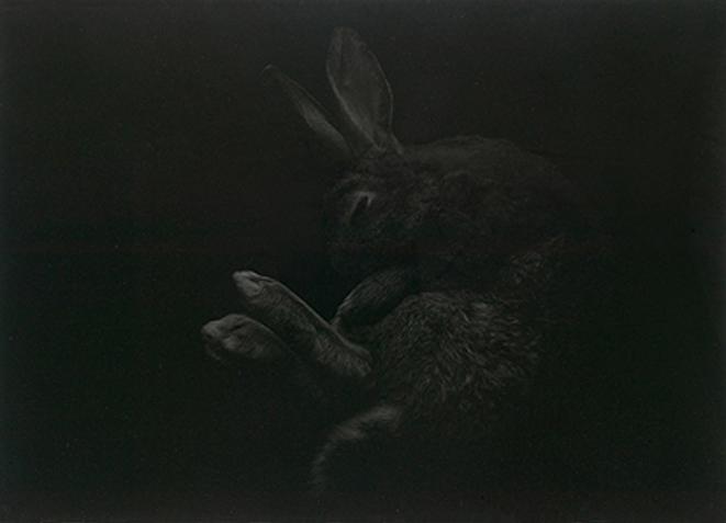 Conejos en el arroyo