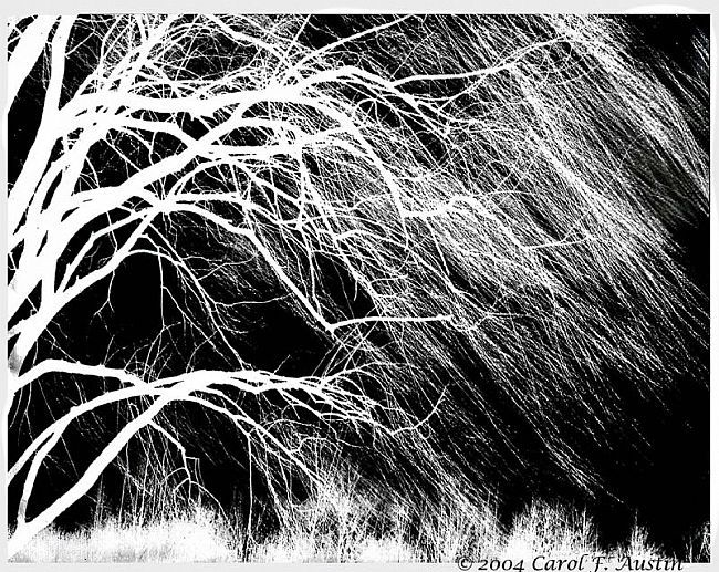 The Bloodstained Willow
