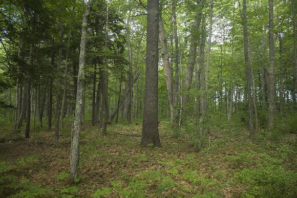 Forest Kiddieland.jpg