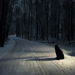The Dog in the Road
