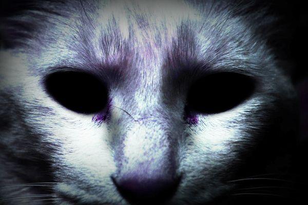 Comida de gatos = Muerte