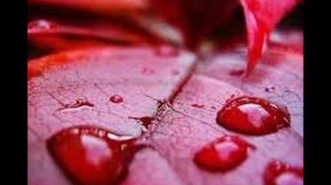 Deszcz krwi