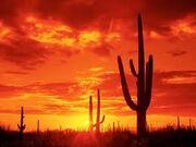 Arizonacactus.jpg