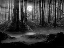 Scarydarkwoods.jpg