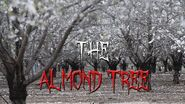 The Almond Tree (Ft