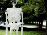 A Plastic, Halloween Skeleton