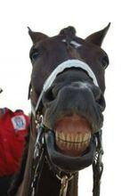 Horse-smile 2822158.jpg