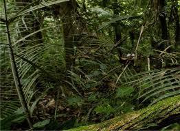 Canis Latran's Jungle Story