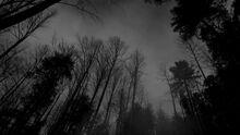 Forest-black-white-dark-forest-wallpaper.jpg