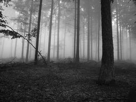 Foggy forest 1 640.jpg