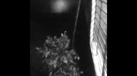 Barulhos no quintal