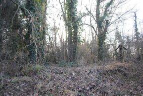 Slender forest 4