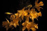 Yellow-narcissus-2174525 1920