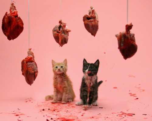 I regali del Gatto