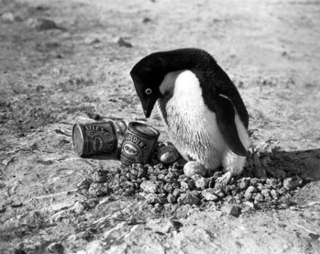 Memorie di pinguino
