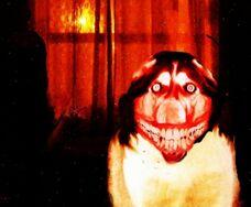 Smiledog.jpg