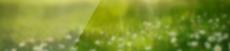 Пасхальный кролик Фон.png