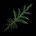 Pine Tree Sapling Icon.png