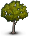 Rubber Tree Icon.png