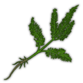 Green Herb Icon.png