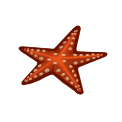 Starfish Icon.png