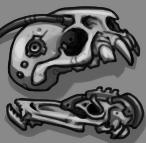 Collection of Alien Skulls