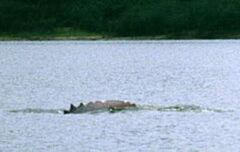Sawtooth dolphin 2.jpg