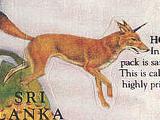 Horned jackal