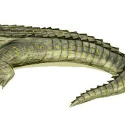 Giant caiman