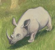 Pygmy rhinoceros Coudray