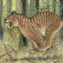 Tigre dantero