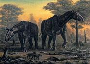 Paraceratherium transouralicum