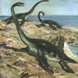 Pygmy plesiosaur