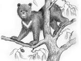 Nepalese tree bear