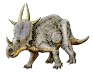 Rubeosaurus NT transparent