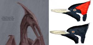 Cuban pterosaur.png