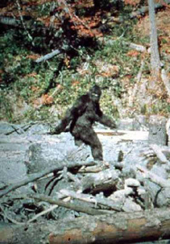 Bigfoot/Gallery
