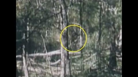 Breakdown - Bigfoot Film Oldest on Record from 1963, Louisiana
