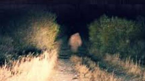 Beware_of_the_Yucca_Man.