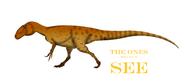 Burrunjor erythrorhynchus