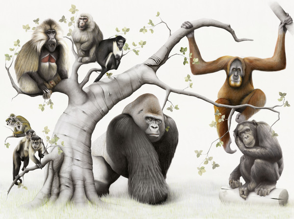 Primates.jpg