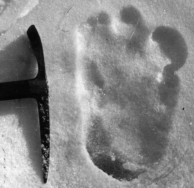 Bigfoot/Evidence