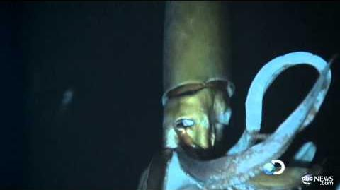 Giant Squid Caught on Tape for First Time for Discovery Channel's 'Monster Squid The Giant Is Real'